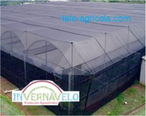 la tela agrícola es usada para reforzar los invernaderos o para colocarse debajo de estos.