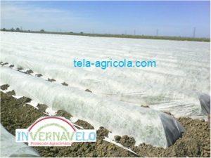 Esta tela es muy versátil y se puede utilizar de diversas manera y en diferentes cultivos.