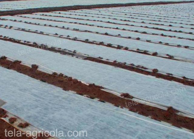 tela térmica usada en campo de cultivos