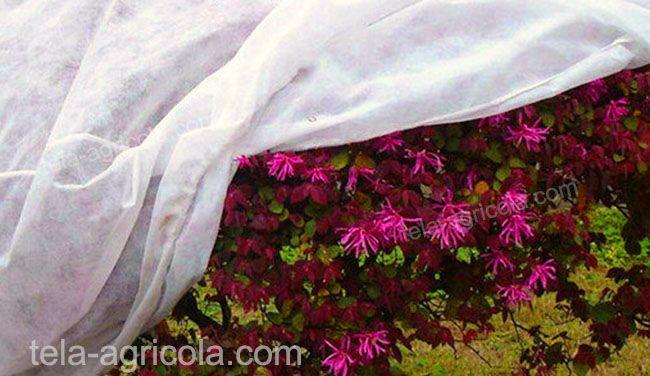 flores protegidas con la tela térmica